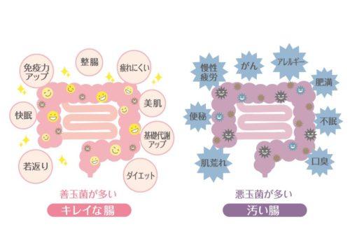 食生活チェック【グリーンライフヘルスサイエンスオフィス 新井 里恵】
